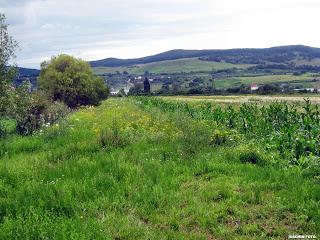 , Probleme în agricultură?, startachim blog, startachim blog