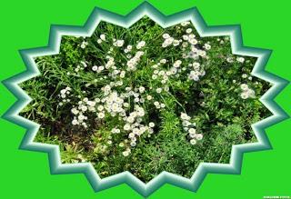 , Flori din grădină, startachim blog, startachim blog