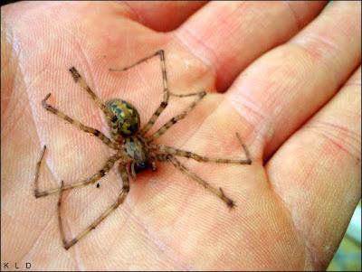 , Insekten und Spinnen. Curaj…., startachim blog, startachim blog