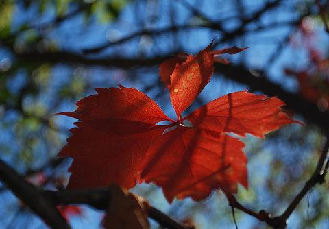 , How to Achieve Picture Perfect Shots via Digital Photography, startachim blog