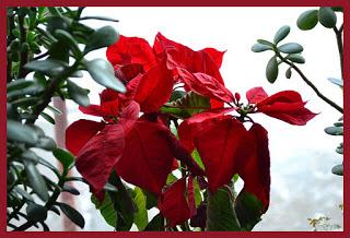 , Săraca floare, startachim blog