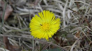 floare-galbenă