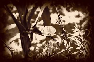 fotografie-veche