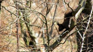 , La plimbare prin copaci, startachim blog, startachim blog
