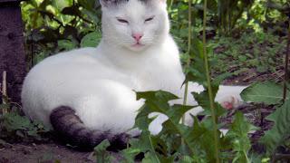 , Pisica albă, startachim blog, startachim blog