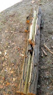 lemn-crepat