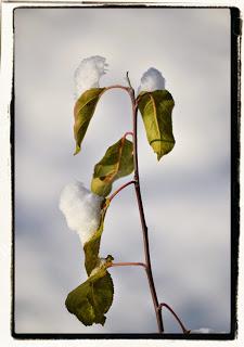, Ce frumos ninge afară, startachim blog