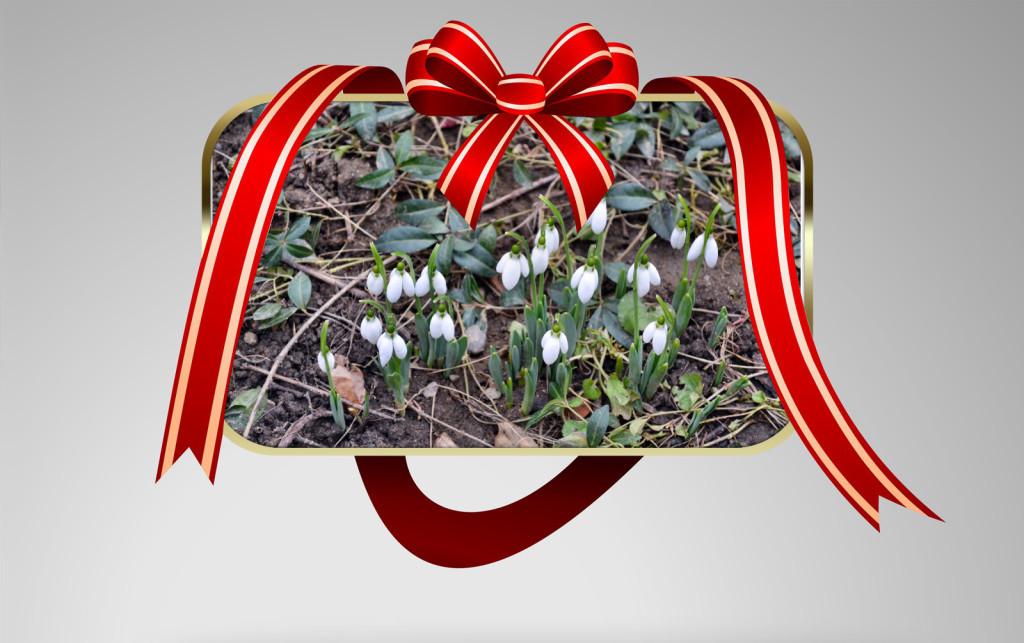, The first flowers of spring, startachim blog, startachim blog