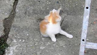 , Drăguțe pisicuțe, startachim blog, startachim blog