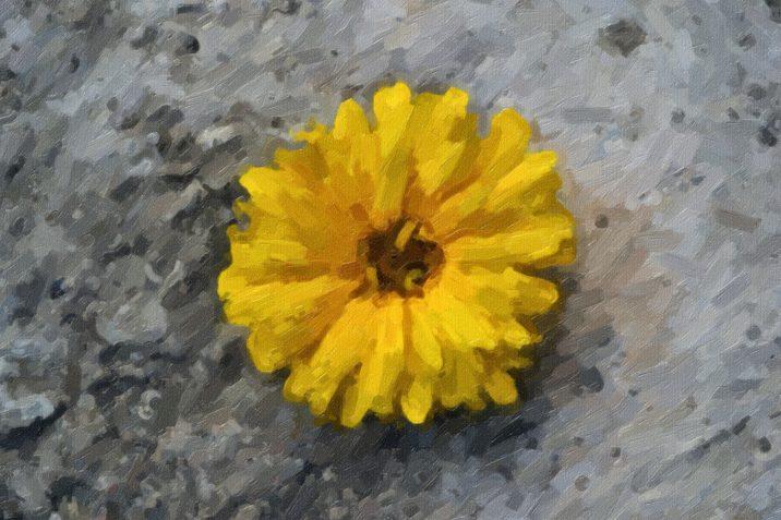 , Floare pe ciment, startachim blog