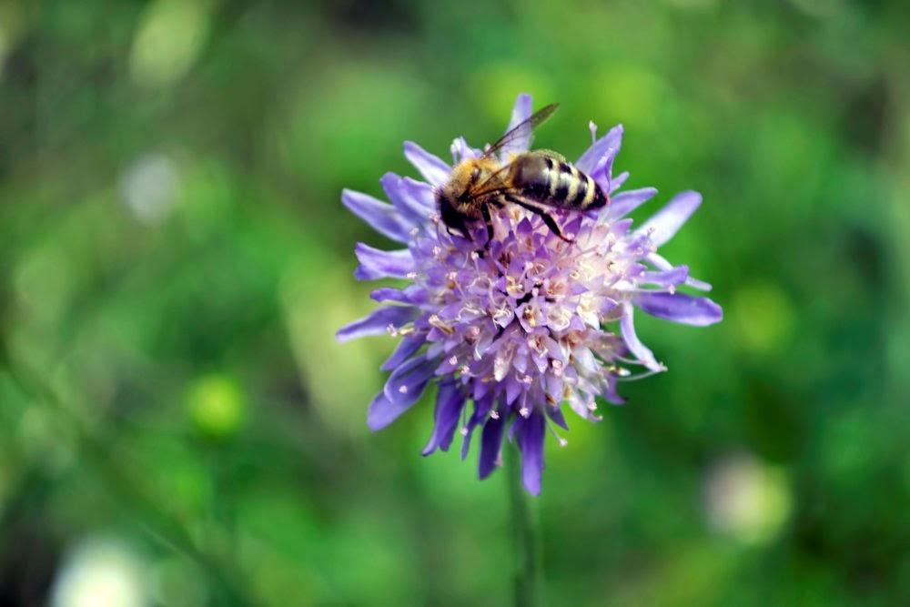 , Rău a fost pentru albine, startachim blog, startachim blog