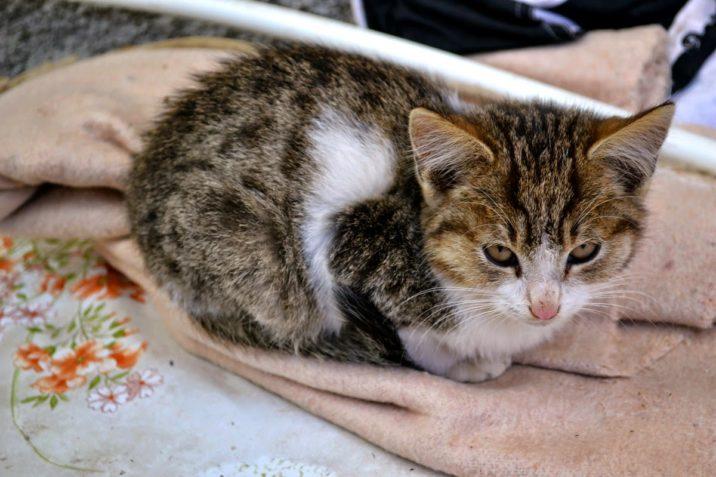 , Pisicuța fotogenică, startachim blog