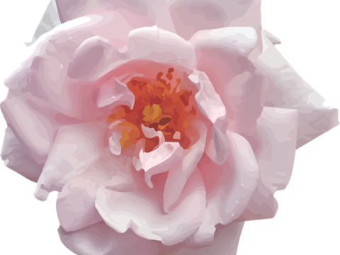 , Trandafiri cu fundal subtil, startachim blog