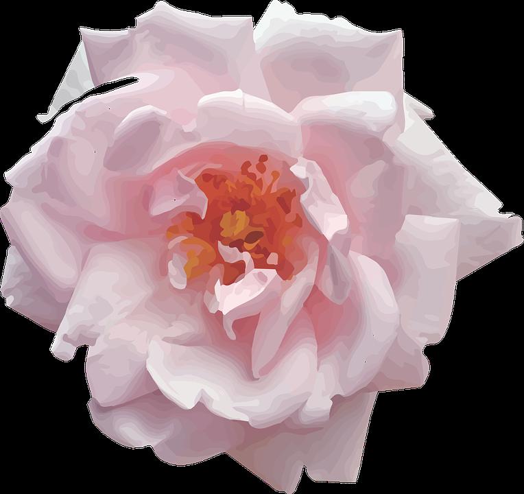 free-pink-rose