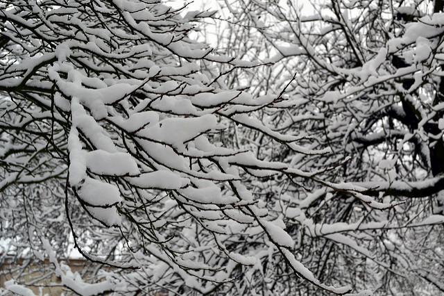 , Branches with snow, startachim blog, startachim blog