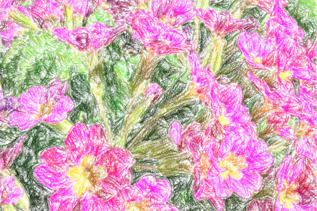 primula,painting,digital, Primula in digital crayon, startachim blog, startachim blog
