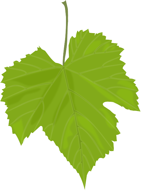 frunze,leaf, Despre frunze, startachim blog