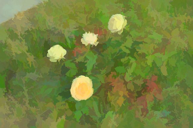 roses,image,painting, Yellow roses, startachim blog