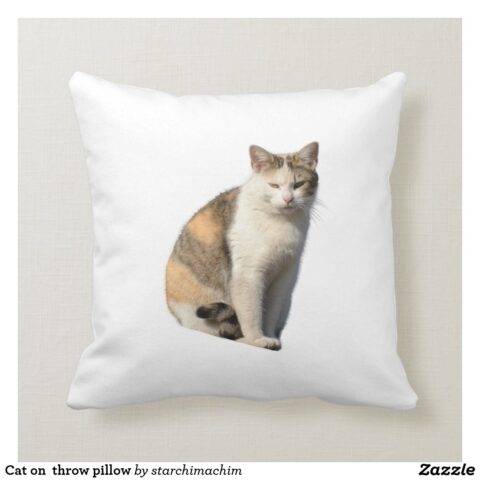 cat on throw pillow r107a1cb15c844fcba075bb72d7edd54d 6s309 8byvr 1024.jpg